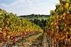Toscana2010-188