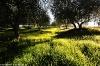 Toscana2010-640